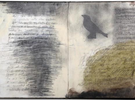 Zea Morvitz —Language of Birds